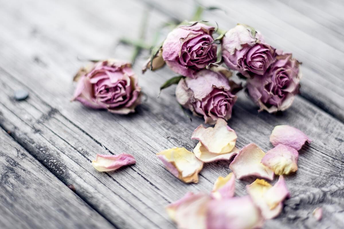 Oxidativer Stress lässt Blumen schneller verwelken.