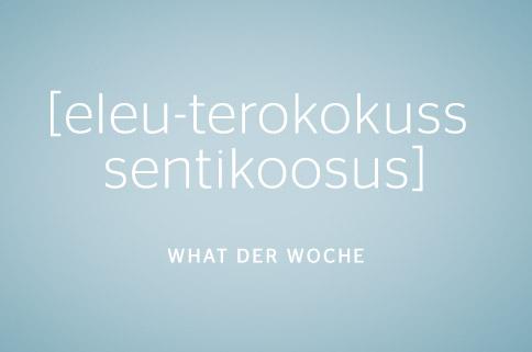 eleutherococcus-senticosus