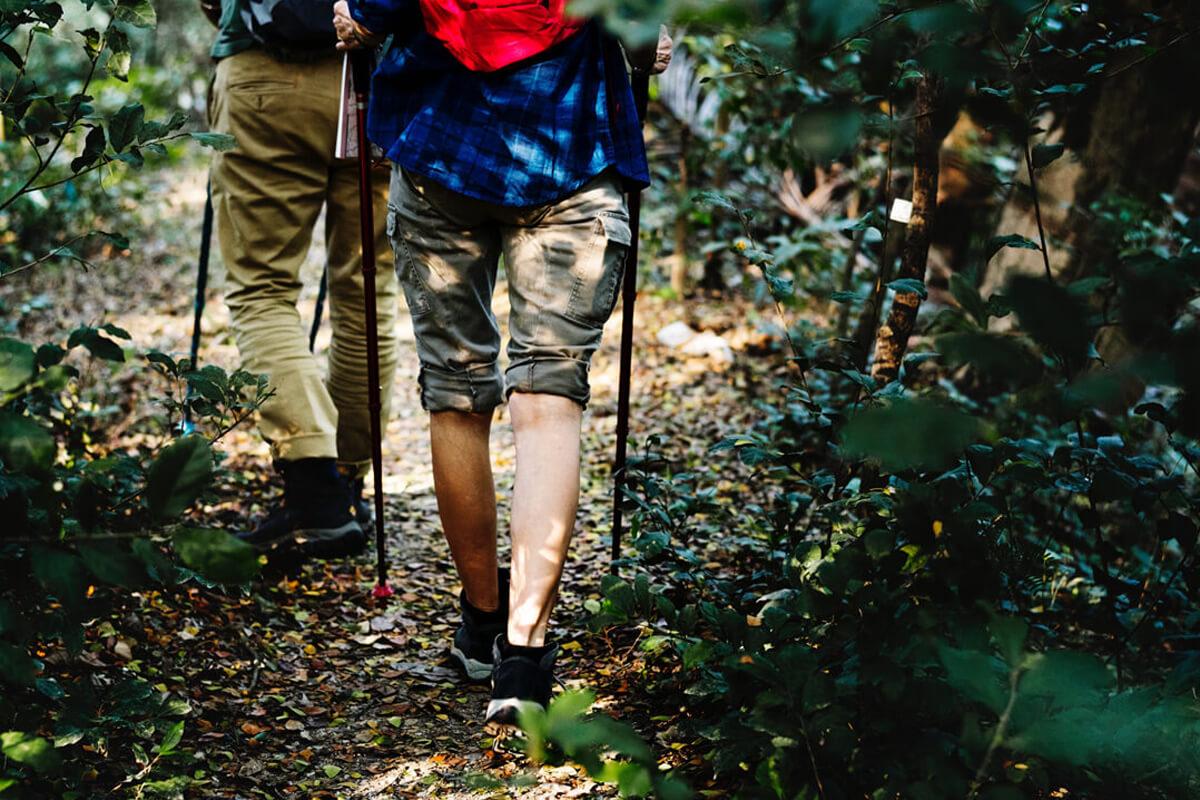 Zwei ältere Männer wandern im Wald.