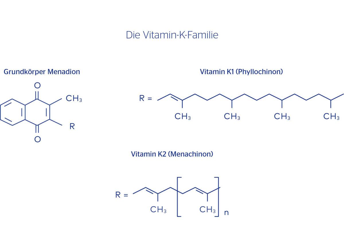 Die Vitamin-K-Familie