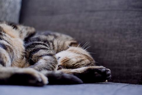 Anti Stress Tipps nehmen auch Katzen ernst