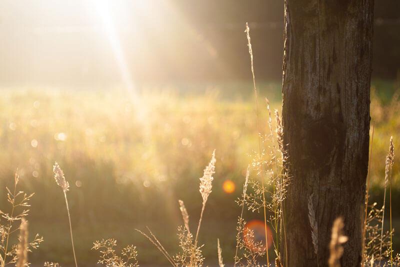 Vitamin D kann der Körper selbst durch die Sonne synthetisieren