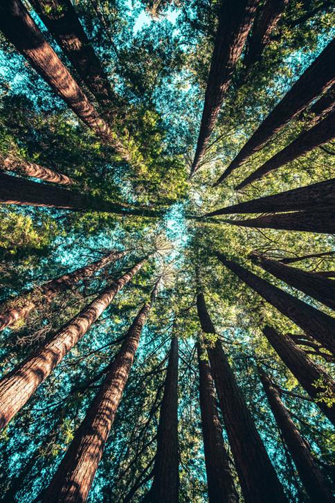 Waldbaden kommt aus Japan und nennt sich dort Shinrin Yoku