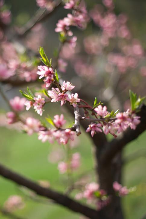 Schlapp- und Antriebslosigkeit im Frühling ist ein verbreitetes Phänomen