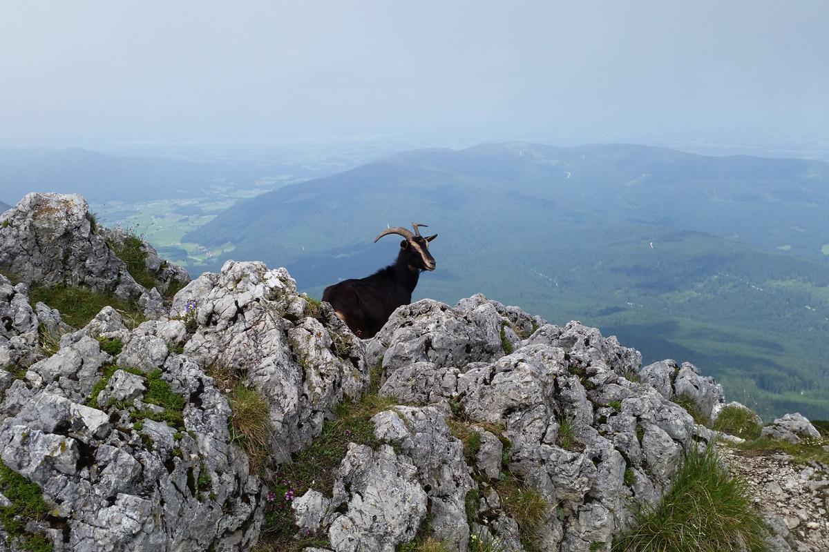 steinbock_wandertipp-hochstaufen